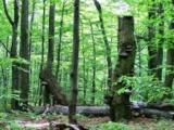 Vlastníci lesov píšu A.Dankovi pre výzvu UNESCO