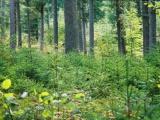 Na Slovensku pribudnú tri chránené územia