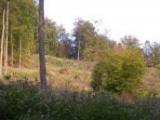 Klenotom Brezna sú mestské lesy