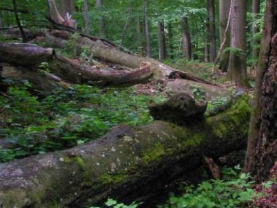 Sú pralesy na východe chránené správne?