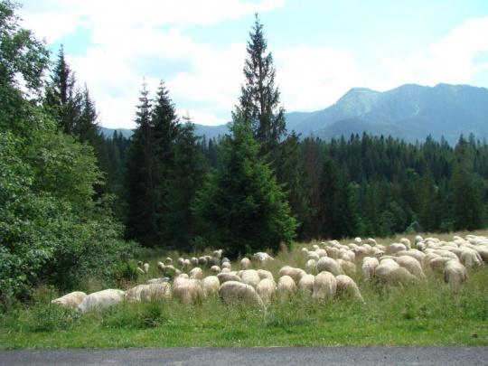 Aké je a bude slovenské životné prostredie?