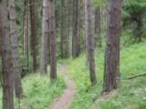 Vzdelávanie na lesných chodníkoch