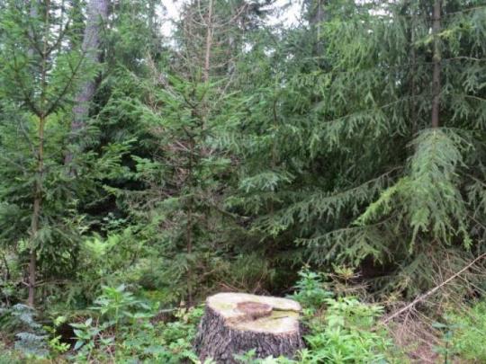 Vláda schválila Zelenú správu 2020: Minuloročná ťažba dreva bola nižšia ako objem dreva, ktorý za ten istý čas v lesoch prirástol