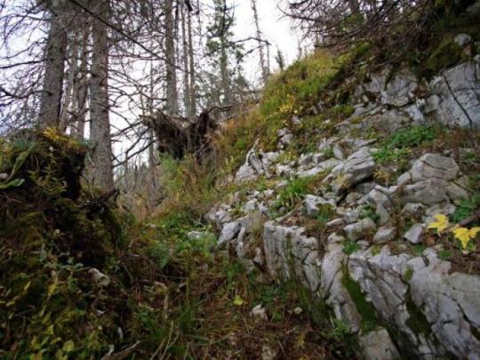 Príprava ihličnatých lesov na obdobia sucha: Smrek a jedľa horúcimi témami